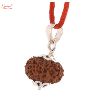 natural and certified 13mukhi/face rudraksha