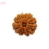 14 mukhi/face loose rudraksha of Nepal