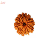 12 mukhi/face loose rudraksha of Nepal