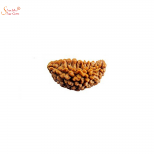 one mukhi loose rudraksha of nepal