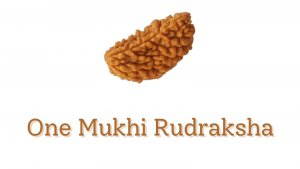 Everything to know about One Mukhi rudraksha